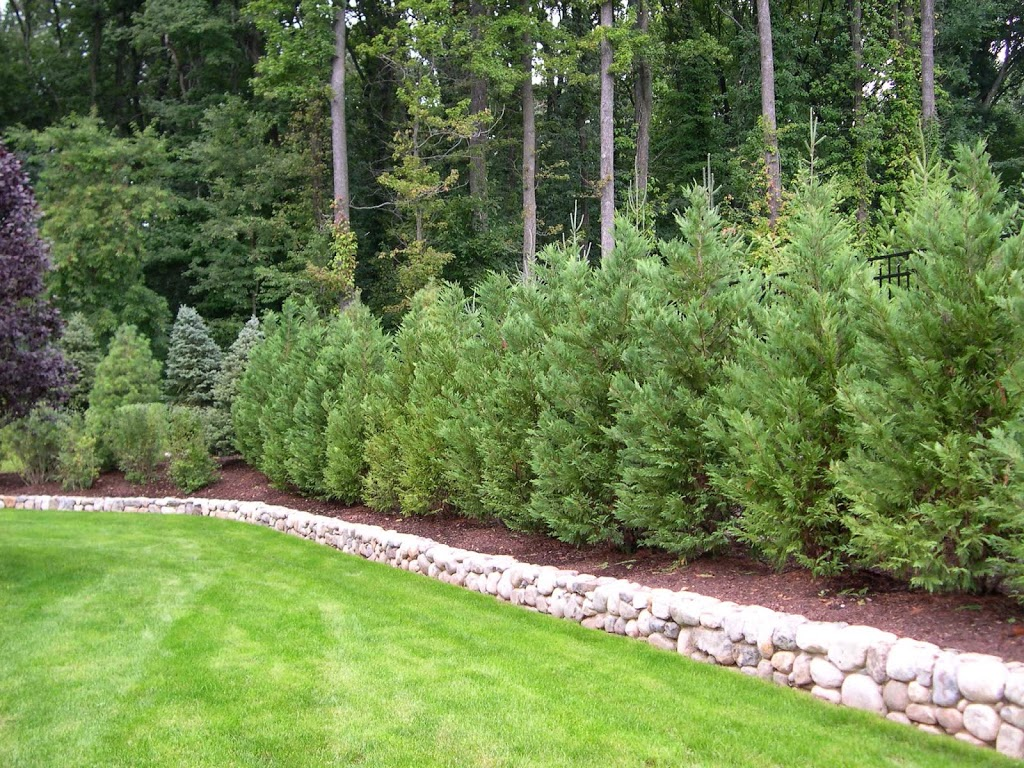 Best trees and plants for privacy truesdale landscaping for Backyard privacy landscaping trees