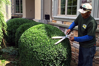 Selective Pruning & Bed Care