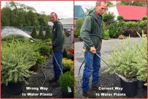 Wrong and Correct Way to Water Plants